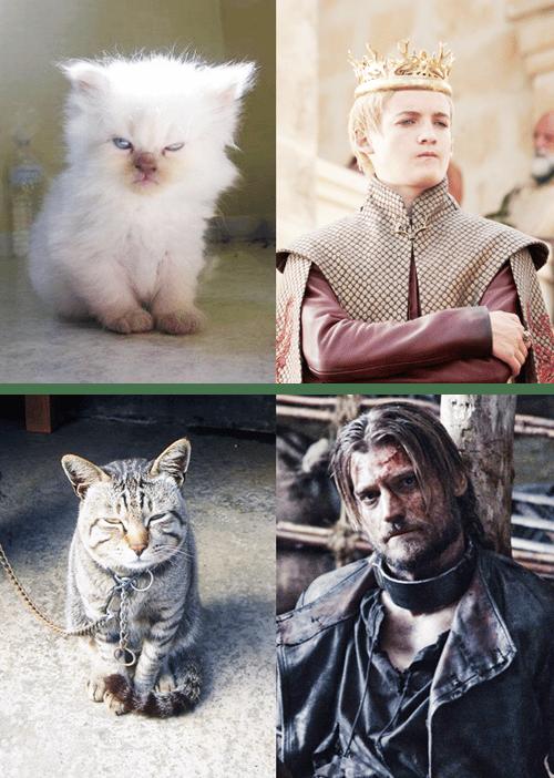 Il trono di gatti mondonerd