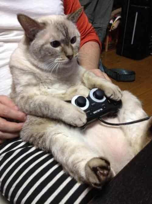 gatti-gamer (1)