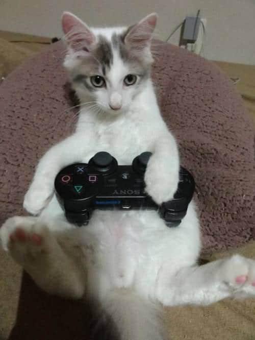 gatti-gamer (10)
