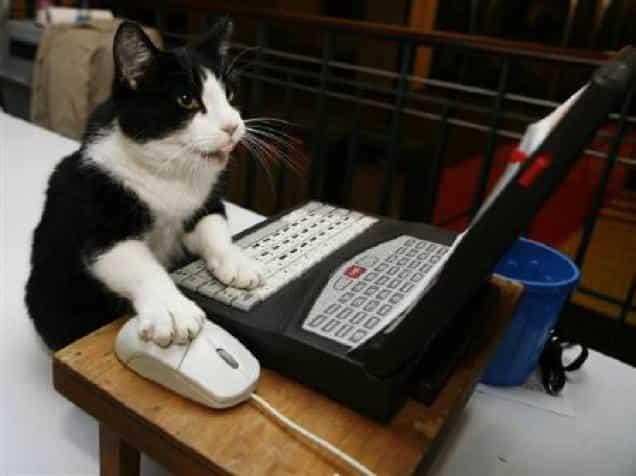 gatti-gamer (2)