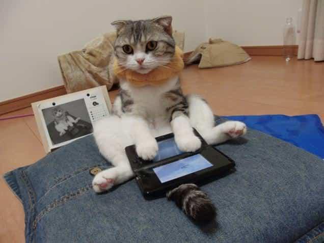 gatti-gamer (3)