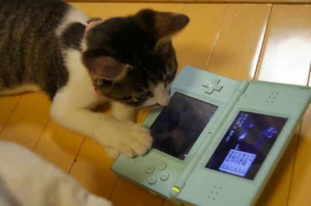 gatti-gamer (4)