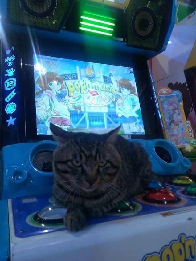 gatti-gamer (5)