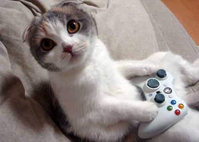 gatti-gamer (6)