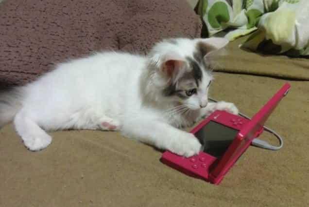 gatti-gamer (7)