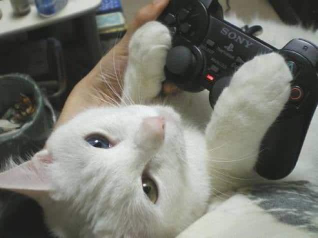 gatti-gamer (8)