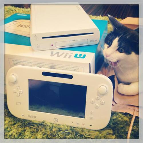 gatti-gamer (9)